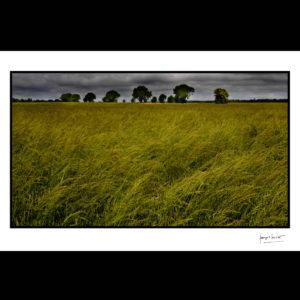 normandie temps maussade et herbes folles boissey le chatel © francois louchet