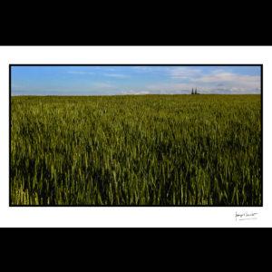 normandie clochers sur champ deblé douvres la délivrande © francois louchet