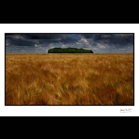normandie l'ile du petit bois le troncq © francois louchet